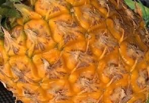 菠萝涨价近3倍创新高从原来每斤1元多上涨到3元