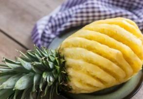 徐闻菠萝价格收购价上涨原因最新答案公布!