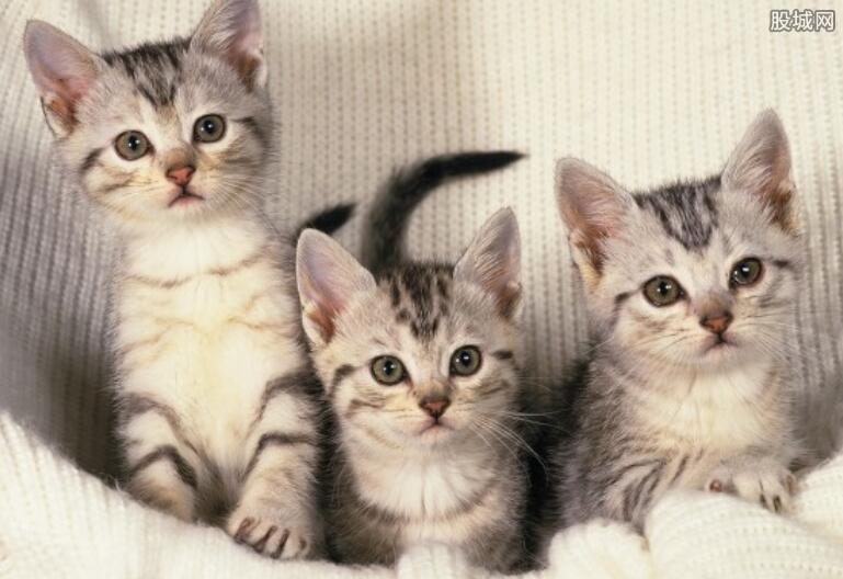 共享猫咪价格