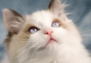 共享猫咪生意火爆想租猫要排队等候!