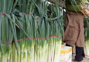 韩国大葱价格暴涨今年1月食品价格同比上涨6.5%