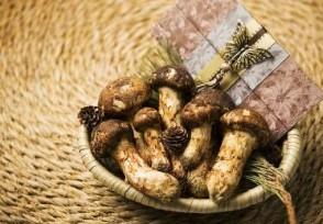 日本松茸拍卖一颗高达9.6万日元 销售异常火爆
