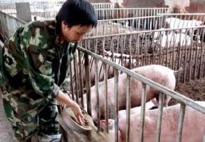 什么导致猪价下跌未来生猪价格行情如何运行?