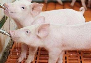今日猪价最新走势 广东猪肉多少钱一斤