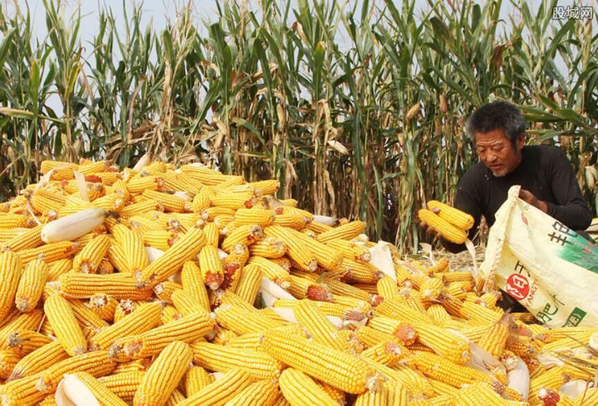 玉米价格多少钱一斤
