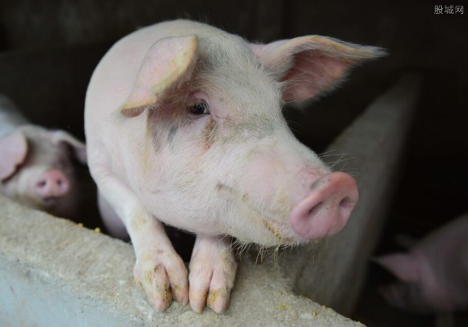 包头突发非洲猪瘟疫情