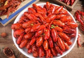小龙虾一斤降价十几元出货量增多价格走低