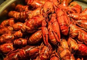 小龙虾为什么这么便宜 一斤价格低至十元是真的?