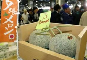 两个蜜瓜拍出16万 是去年交易价格的22.5倍