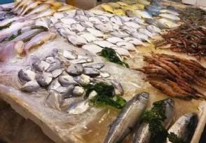 鱼肉价格上涨未来鱼价走势行情如何