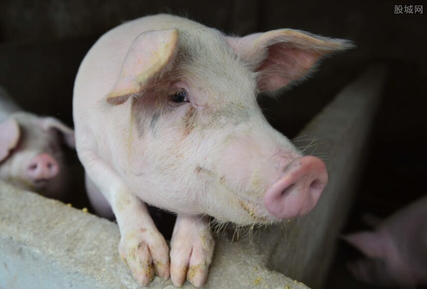 生猪价格多少钱一斤