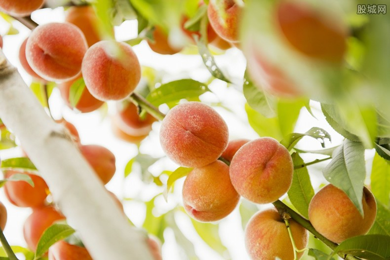 水蜜桃卖128元1个