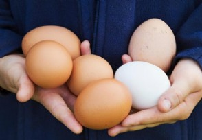 鸡蛋价格为什么一直上涨现在市场价多少钱一斤